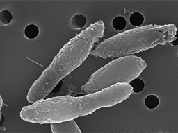 Clostridium butyricum NT